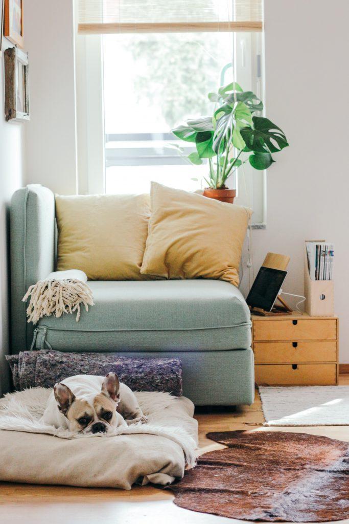 Cozy corner with a dog